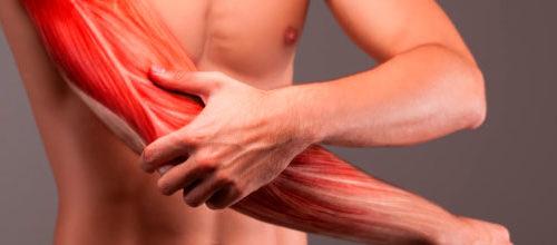 Идентифицированы молекулярно-клеточные процессы, запускающие регенерацию поврежденных мышечных тканей