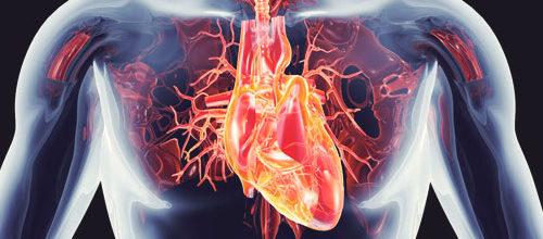 Несколько простых рекомендаций для сохранения своего сердца в здоровом состоянии